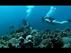 Jekstremalnaja porka v glubine okeanskih korallovyh rifov